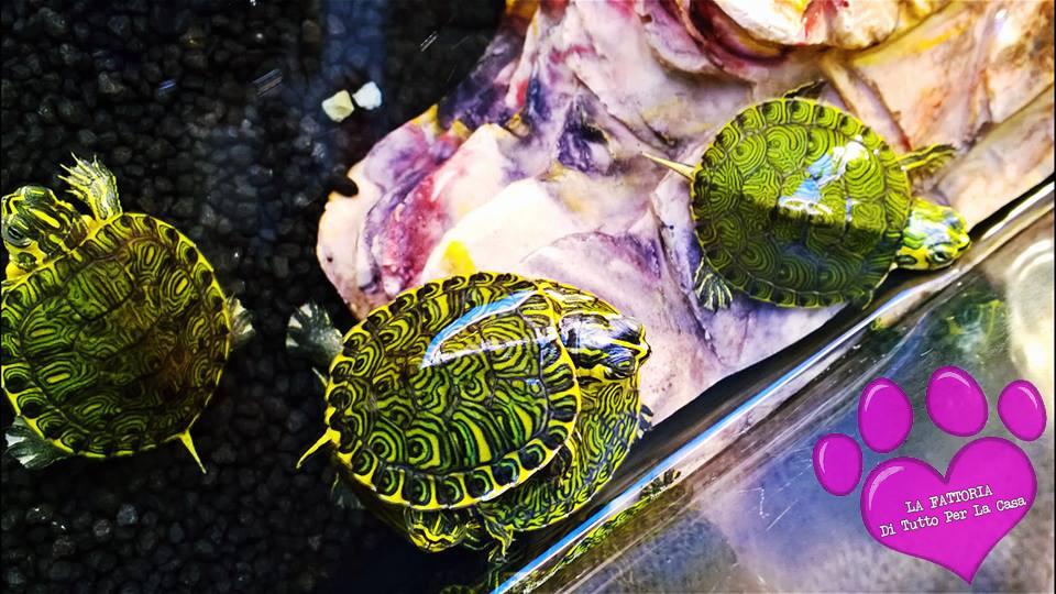 La fattoria di garessio cn tartarughe for Acqua tartarughe